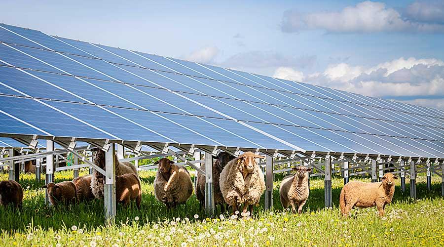 solcelleanlegg